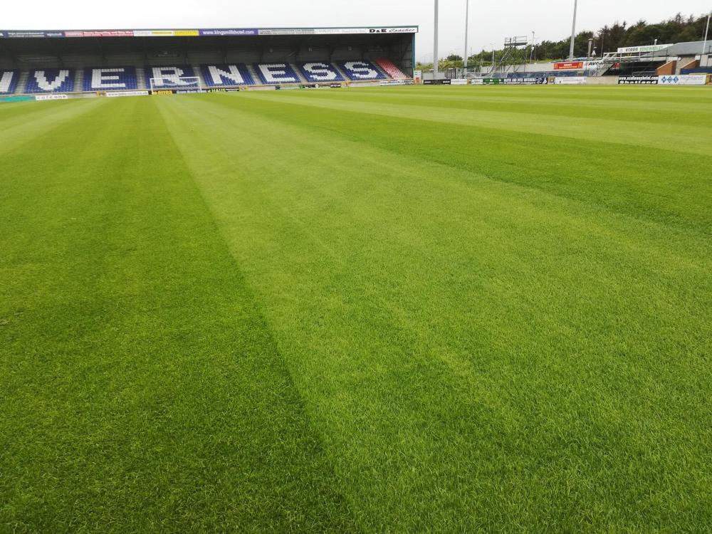 New grass.jpg